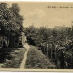 Stadtwald_001