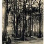 Stadtwald_002